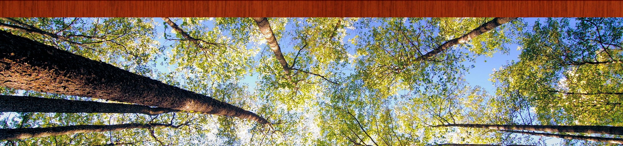 Awe-inspiring view looking up from the forest floor.